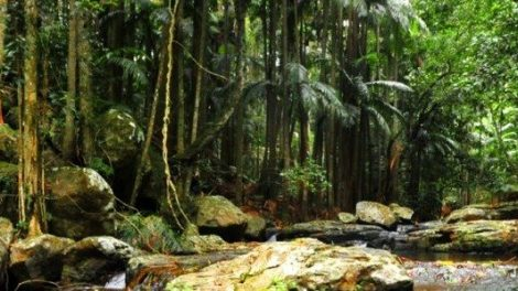 cedar-creek-rainforest025