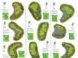 The Glades Golf Club Map 10-18