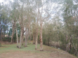Coombabah-13