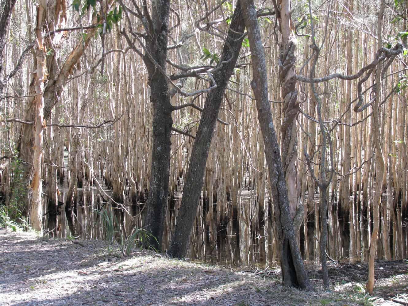 Coombabah Lakelands Conservation Area 04