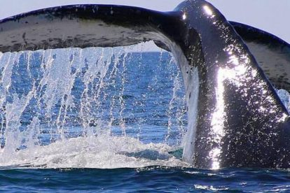 Whale Watching 02