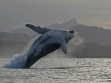 Whale Watching 06
