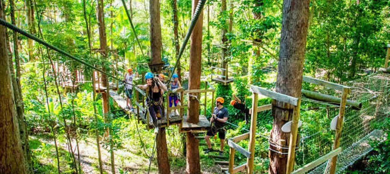 Tree Top Challenge Currumbin High Ropes Course Ticket Prices