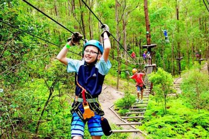 Tree Top Challenge at Currumbin Wildlife