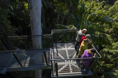 Tamborine Rainforest Skywalk-03