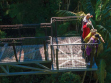 Tamborine Rainforest Skywalk-12
