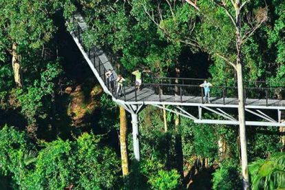 Tamborine Rainforest Skywalk-14