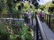 Tamborine Rainforest Skywalk-15