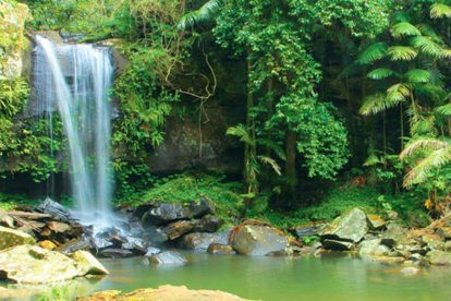 Lamington National Park 05